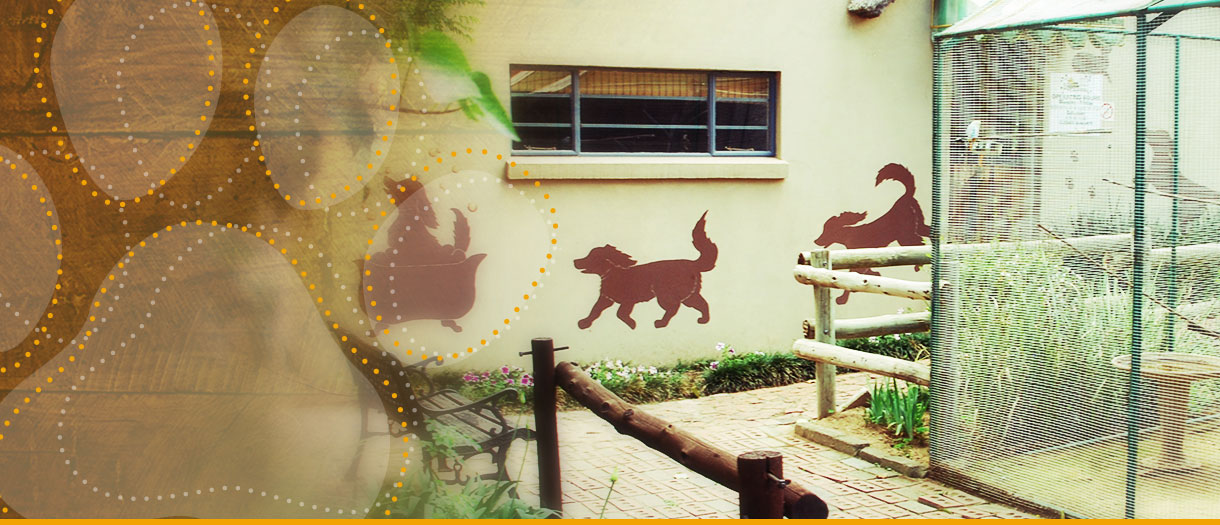 Bow-Wow-Home-Banner04